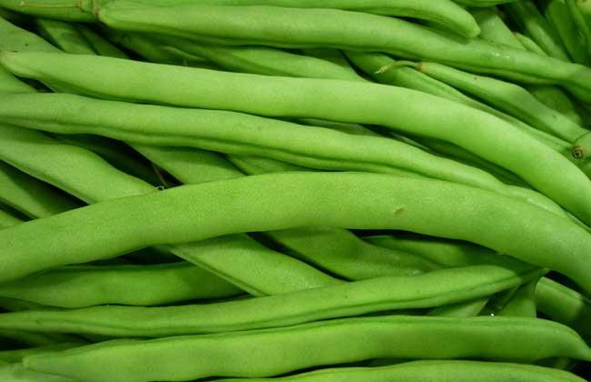 四季豆中毒