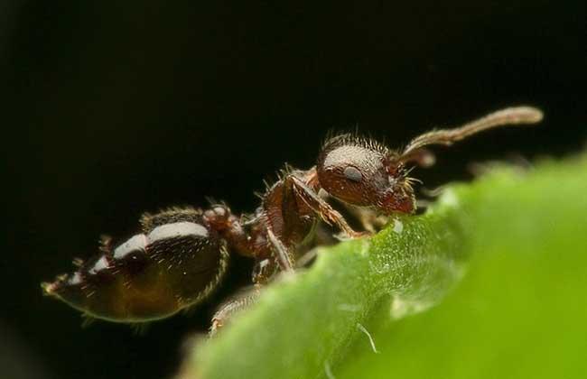 被蚂蚁咬了怎么办