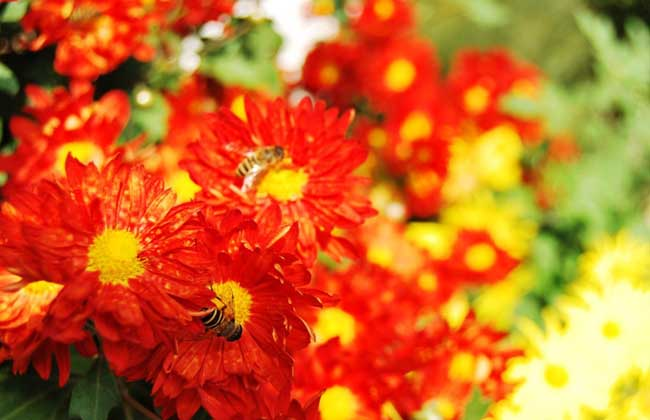 红花的功效与作用