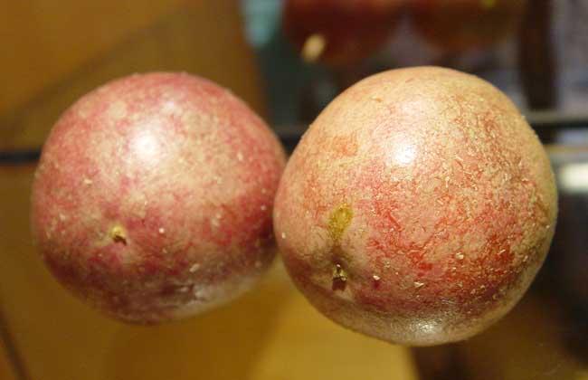 孕妇能吃百香果吗