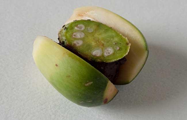 槟榔的危害 吃槟榔的 坏处 女生吃槟榔的危害 经图片