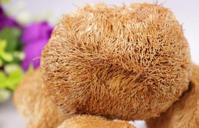 孕妇可以吃猴头菇吗