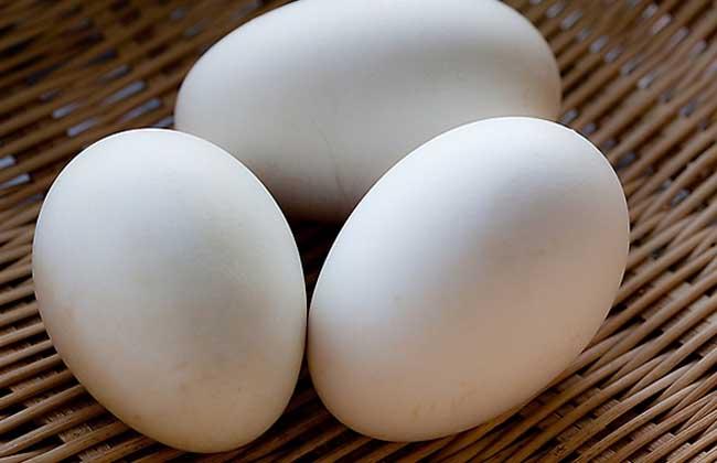 孕妇能吃鹅蛋吗