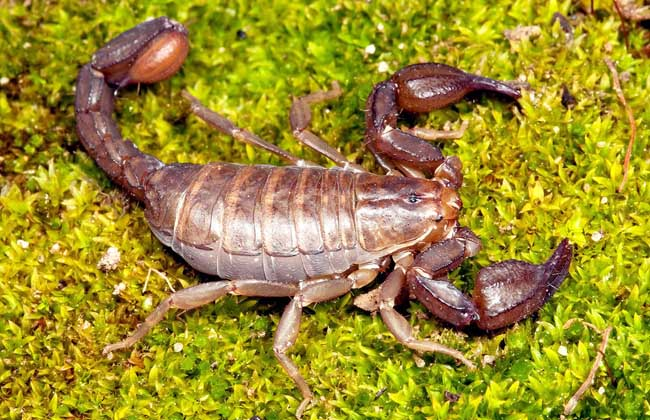 蝎子的生活习性