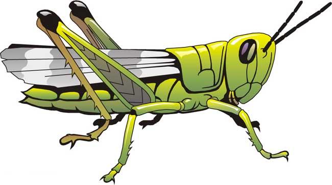 蝗虫的呼吸器官
