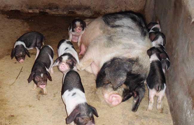 养猪场建设