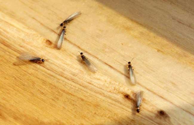 白蚁吃什么? - 特种养殖