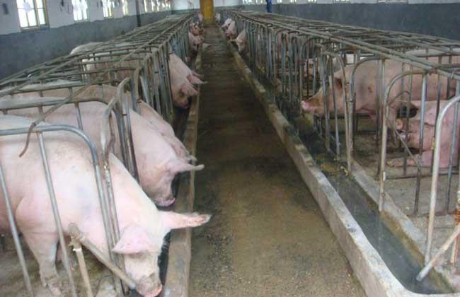 养猪场设计图