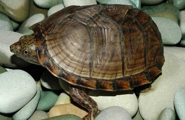 小乌龟怎么养最好