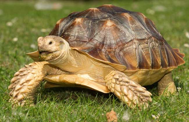 乌龟吃什么