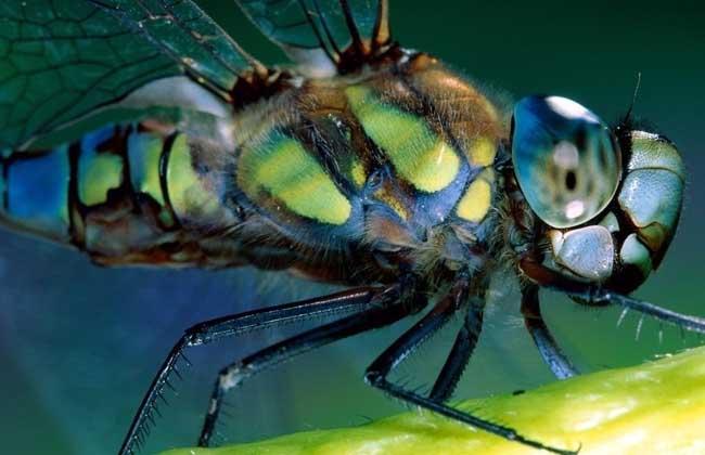昆虫的特征