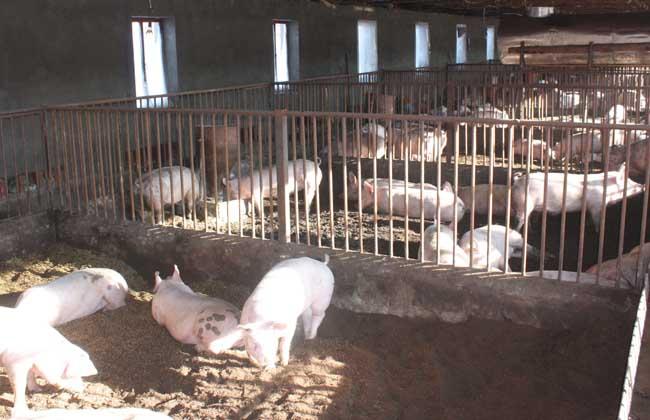 农村小型养猪场设计图
