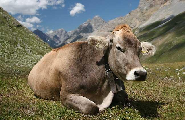 牛养殖场消毒