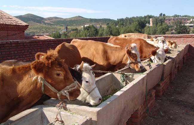 养牛场建设