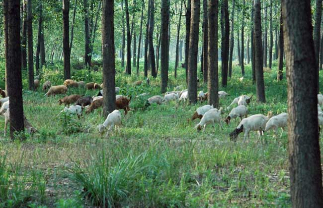 新生小羔羊的饲养管理方法