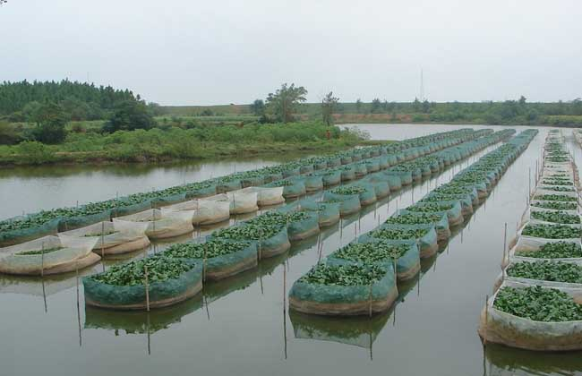 黄鳝养殖的春季管理要点
