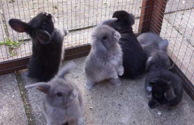 肉兔养殖的饲养原则
