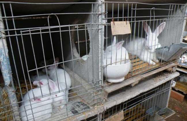 家兔冬季养殖注意防湿
