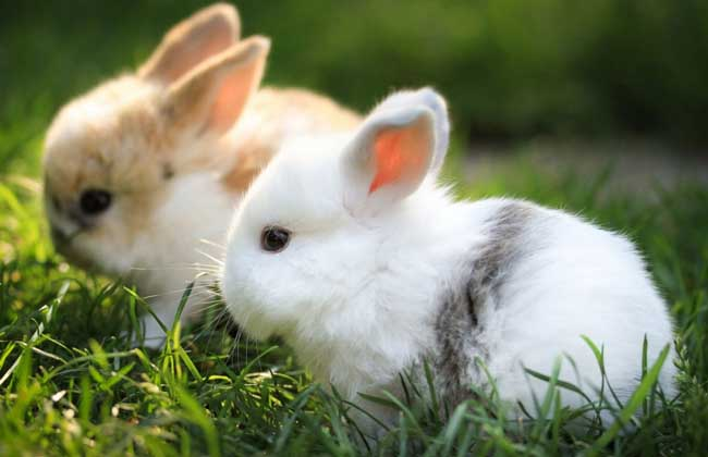 野兔养殖对兔舍建造有哪些要求