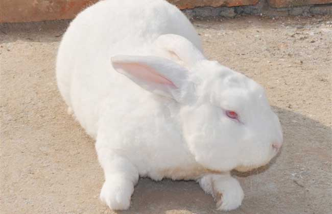 野兔养殖的兔舍环境要求