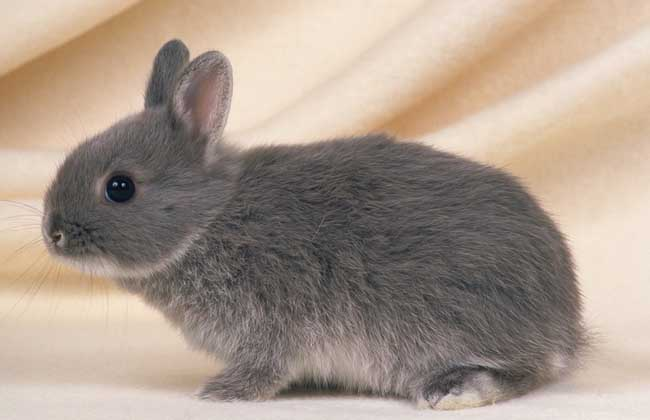 兔子养殖市场前景