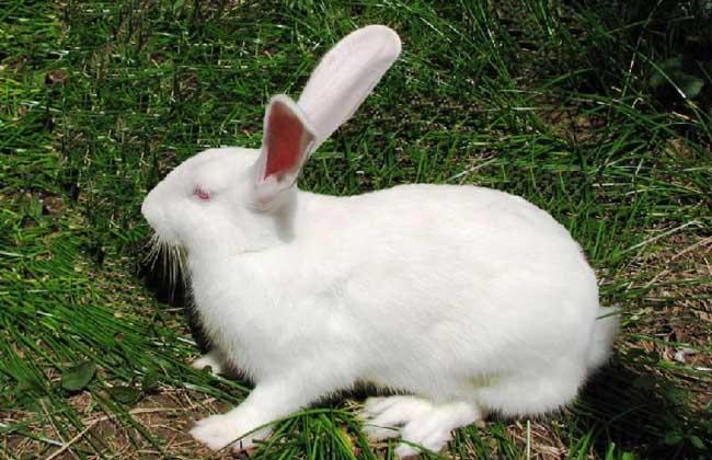 夏季兔子养殖场如何给兔子降温