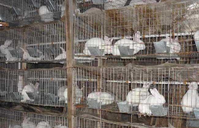 夏季兔子养殖管理技术