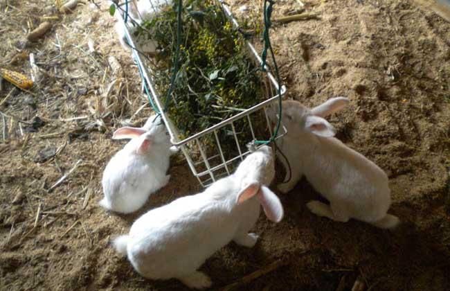兔粪的利用及处理方法