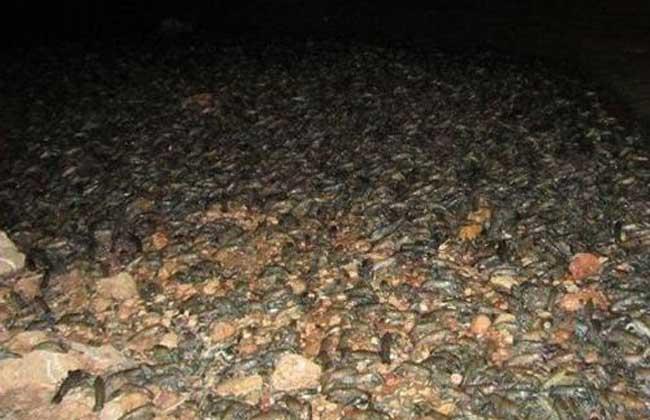 龙虾虾壳的用途