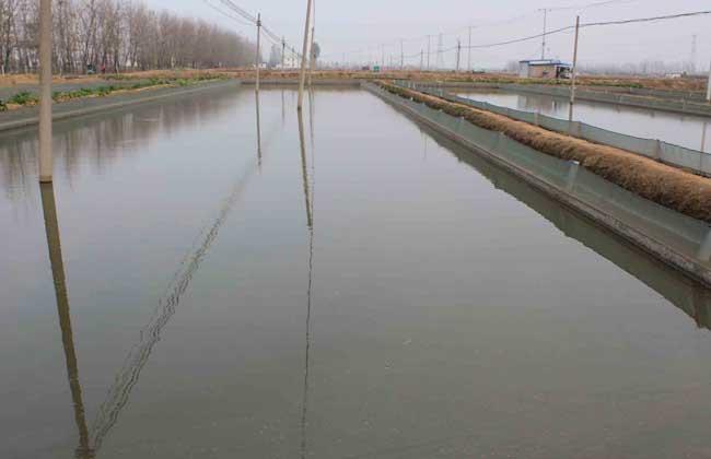 泥鳅养殖中常见几种病害的防治方法