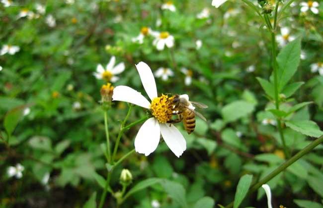 蜜蜂的特点