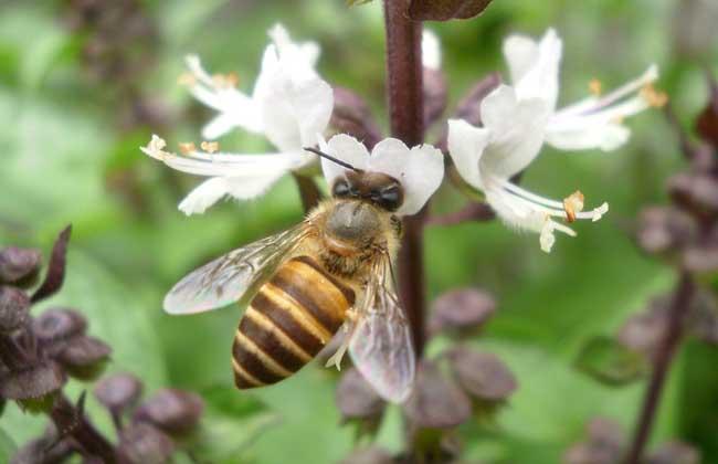 蜜蜂蜂群春季管理方案