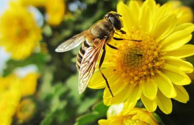 养蜂场养殖中蜂的优势