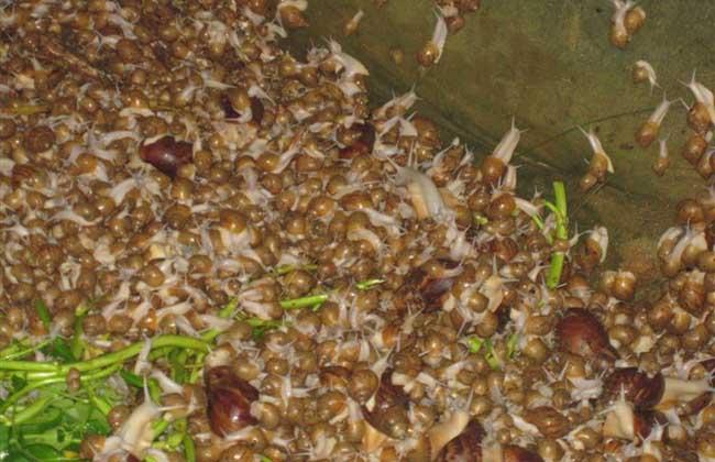 蜗牛养殖的市场价值
