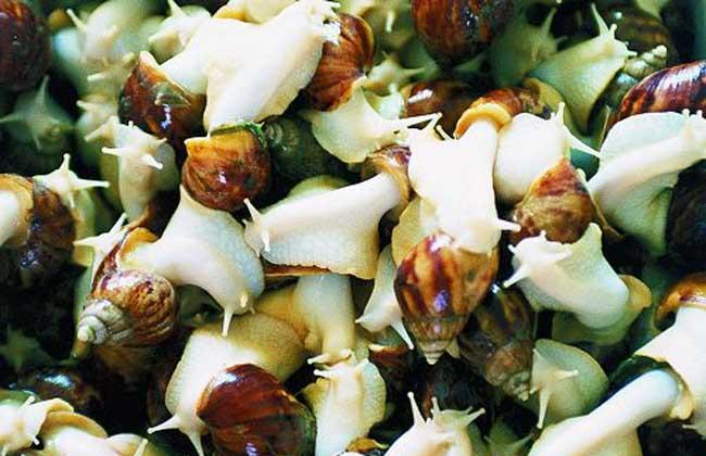 湿度对白玉蜗牛养殖的影响