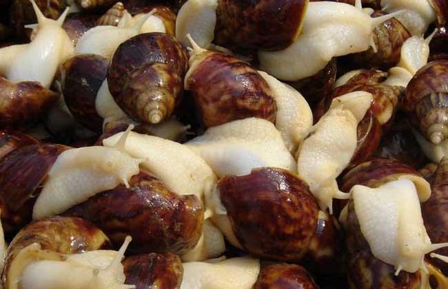 蜗牛病的防治方法