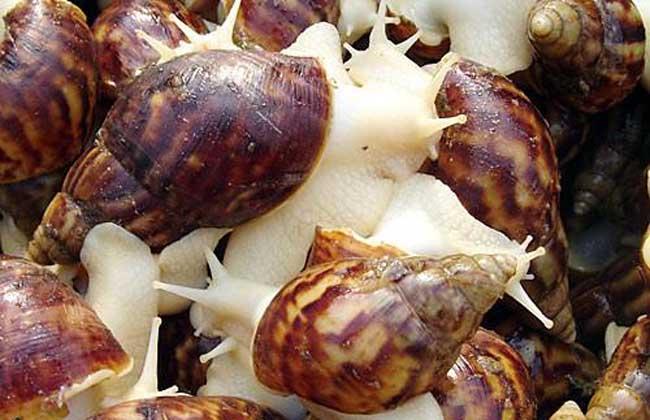 蜗牛是害虫还是益虫