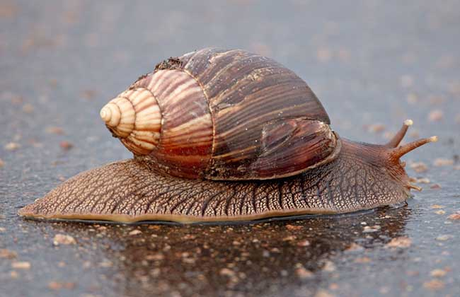 蜗牛的种类