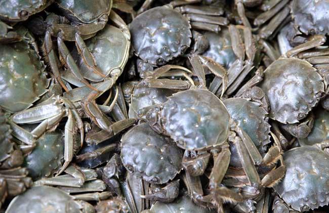 螃蟹水肿病防治方法