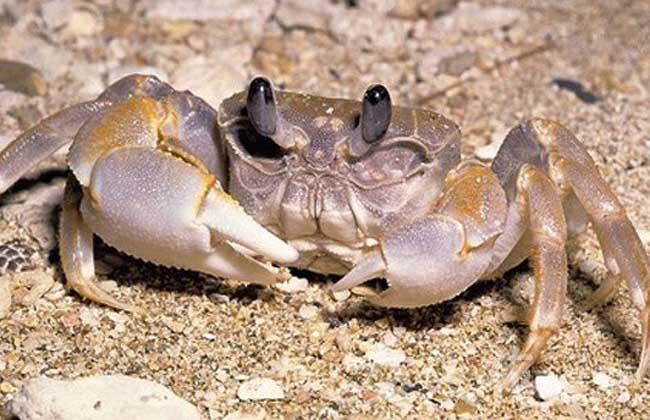 大闸蟹优质养殖技术