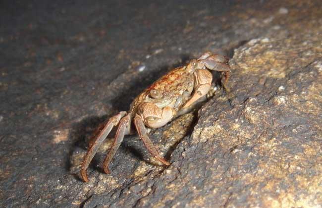 大闸蟹养殖应该具备哪些条件