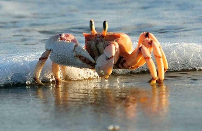 海蟹怎么保存