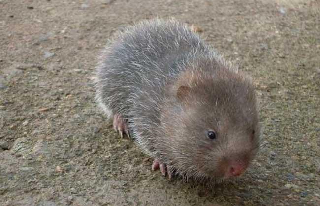 养殖竹鼠常用药物及使用方法