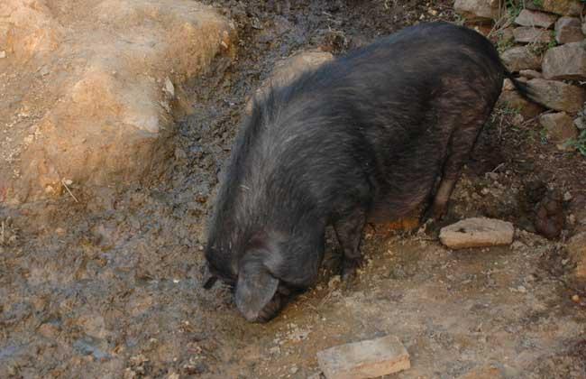 野猪养殖场圈舍建造方法