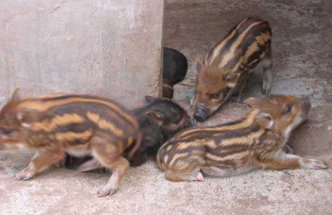 野猪养殖场绿化工作的重要性