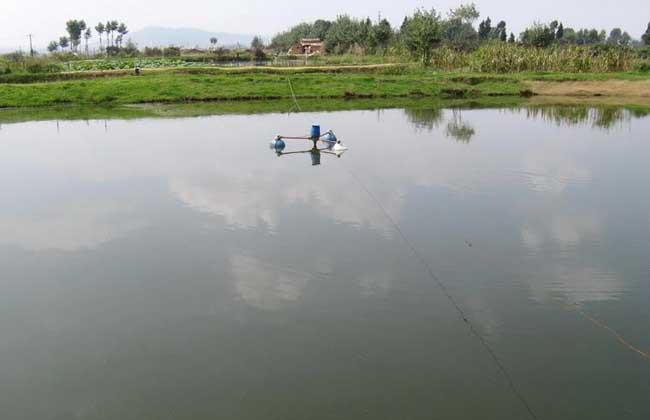池塘养鱼知识