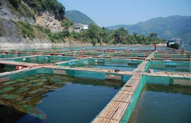 网箱养鱼技术