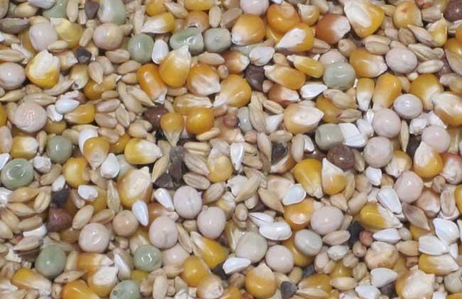 养殖户该如何选购和使用浓缩饲料