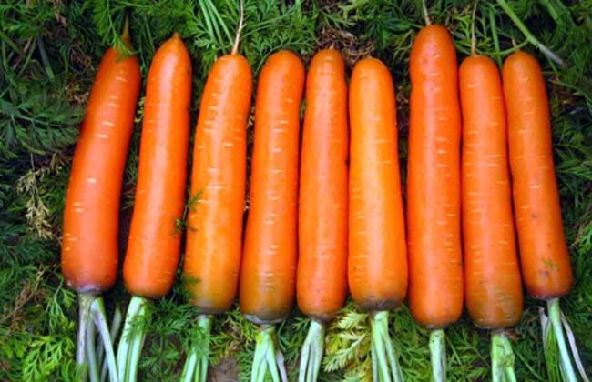 胡萝卜素的作用