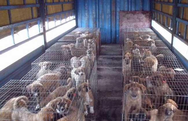 养殖肉狗技术指导视频